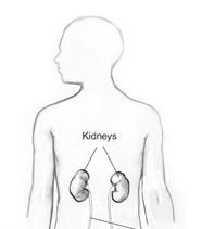 Location of Kidneys