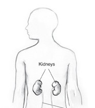 Location of Kidneys