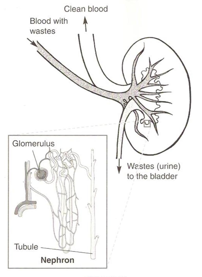 KidneySteps