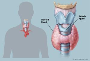 THYROID_72